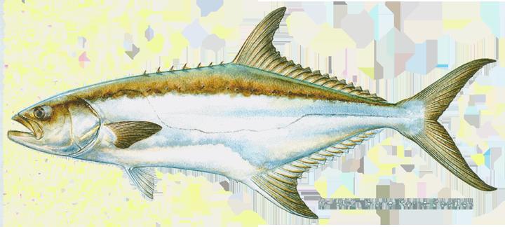 Garrick / Leerfish